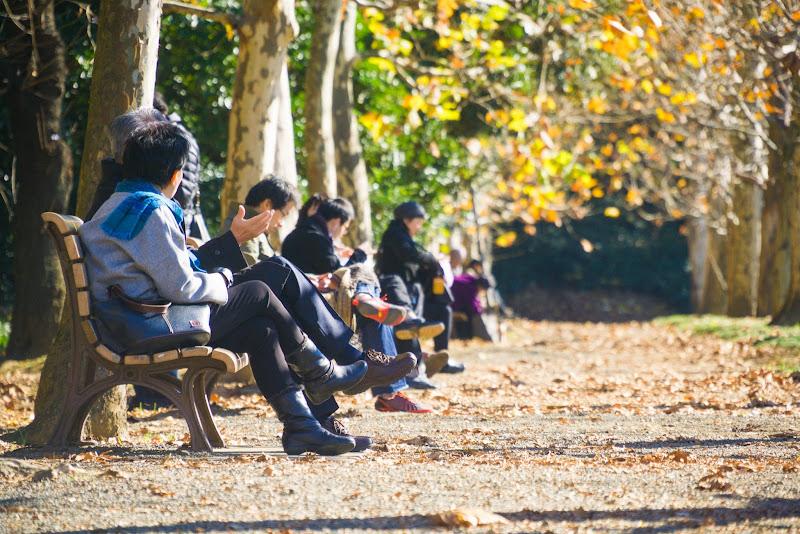 新宿御苑 紅葉 写真17