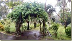 IMG_20180129_Botanical Garden St. Vincent 1