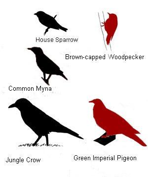 [BRD_IDSizeRef_Woodpeckers+copy+copy+copy+copy%5B4%5D]
