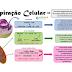 Bioenergética: respiração celular (ciclo do ácido cítrico, cadeia transportadora de elétrons e fosforilação