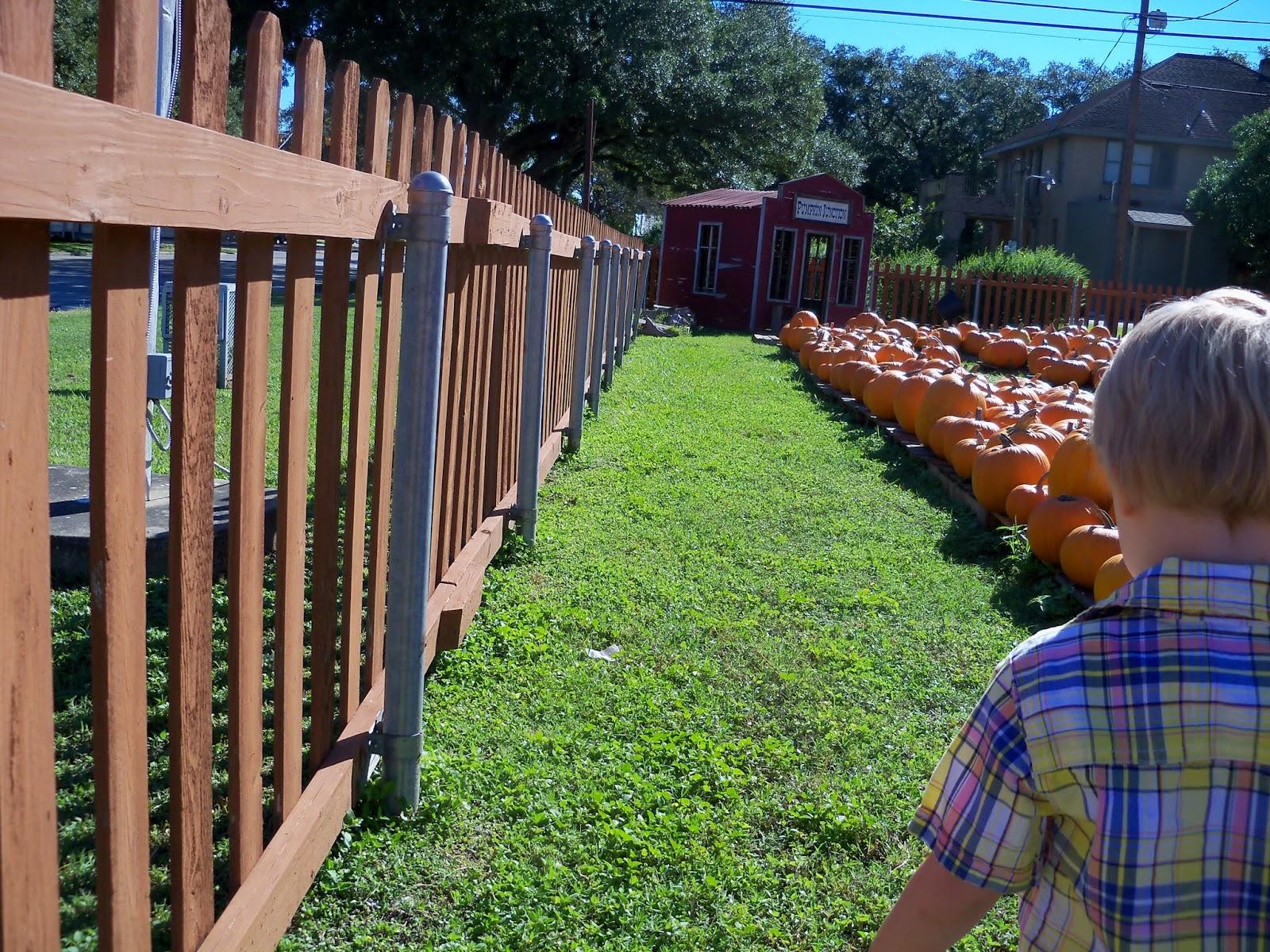 Pumpkin Patch 2014 - 116_4442.JPG