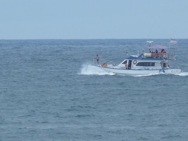 promenades en mer pour voir les dauphins