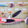 Montessori Inspired Shark Study for Kids
