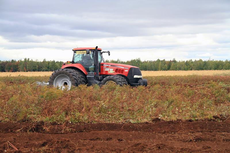 Transformation branchailles en terre agricole - Transformation-de-branchailles-en-terre-agricole-2.jpg