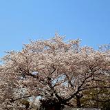 2014 Japan - Dag 7 - tom-SAM_0468-0038.JPG