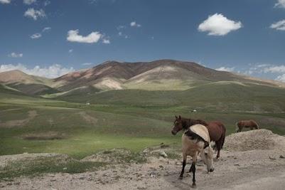 Pferde am 3364 m hohen Kara-Keche Pass