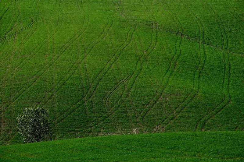 A righe verdi di ottantuno
