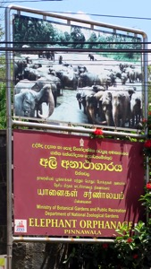 Elephant Orphanage Sign