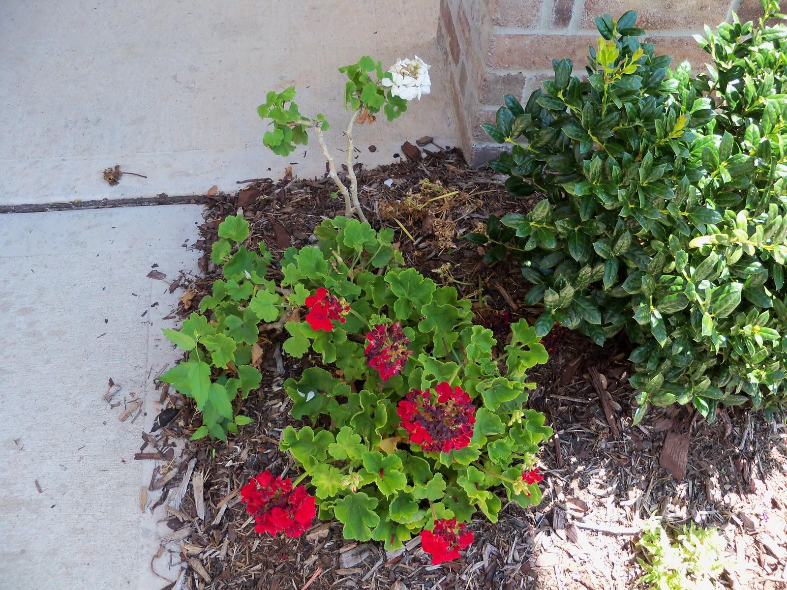 Gardening 2010, Part Three - 101_4521.JPG