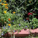 Gardening 2010, Part Three - 101_4414.JPG