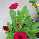 Gardening 2011 - 100_7401.JPG