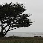 Monterey - Ocean View