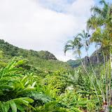 06-26-13 National Tropical Botantial Gardens - IMGP9465.JPG