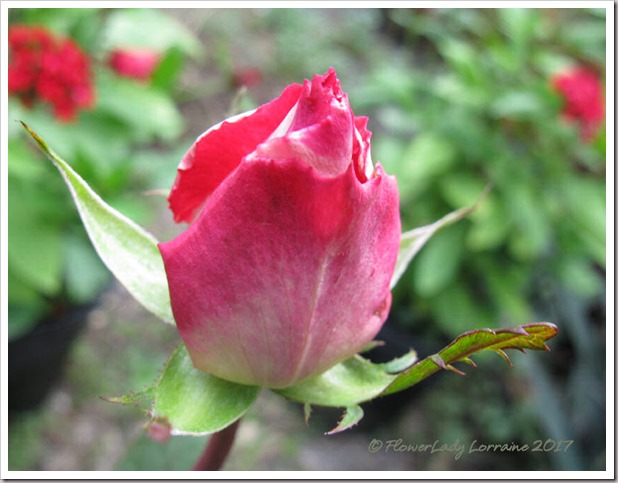 02-13-love-grandiflora