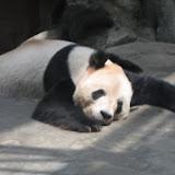 China 2007 - Beijing Zoo