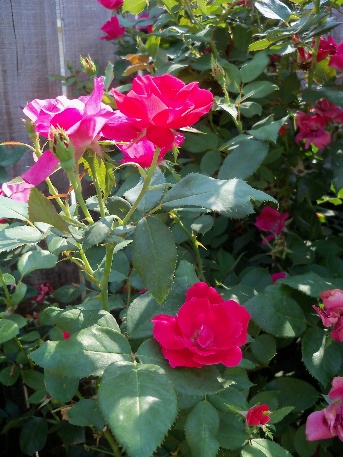 Gardening 2011 - 100_9337.JPG