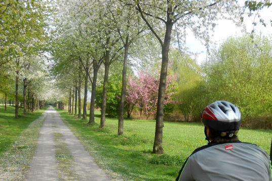 Frühlingsblühen auf einer Allee in Wanne-Eickel