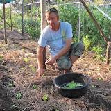 Groenten uitplanten