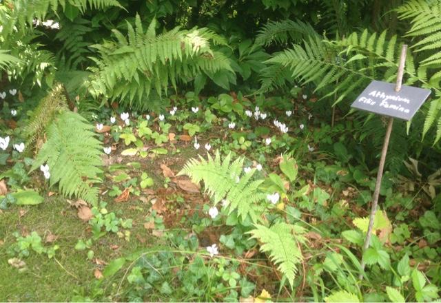 Le jardin d 39 adiante septembre 2015 for Jardin septembre 2015