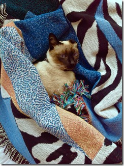1-forgetmenot-coco-cat-chat-plaid-interior-confort