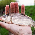 20140427_Fishing_Babyn_006.jpg