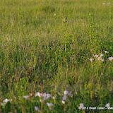 2013 Spring Flora & Fauna - IMGP6332.JPG