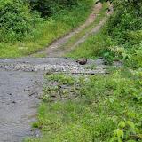 Gué. Vallėe du Rio Guallupe, 1500 m (El Limonal, Imbabura), 5 décembre 2013. Photo : J.-M. Gayman