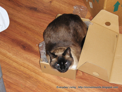 Photo of Koko laying in a very small box