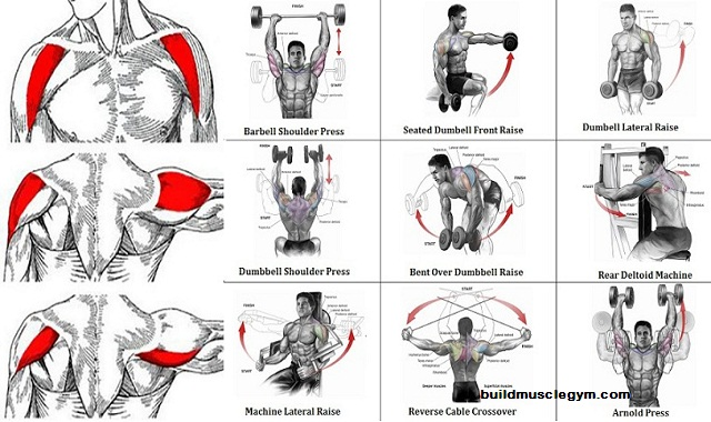 Shoulder Workout Routine for Mass