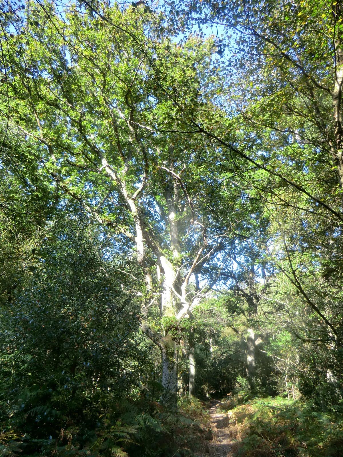 CIMG0645 Dappled sunlight in Costell's Wood