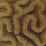 Bonaire 2011 - PICT0060.JPG