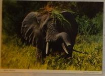 605 11-carte postale