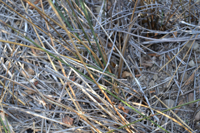 closeup of tule reeds