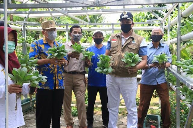 Wakil Walikota Panen Sayur Hidroponik, Langsung Disumbang ke Dapur Umum Jati Asih