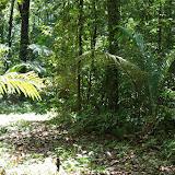 Layon de Crique Tortue en amont de Saut Athanase. Approuague (Guyane), 5 novembre 2012. Photo : J.-M. Gayman
