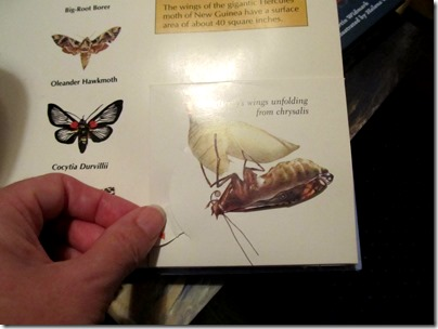 Wings: A Pop-Up Book of things that fly  butterfly 2