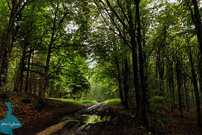 drum forestier valea berii muntele rosu