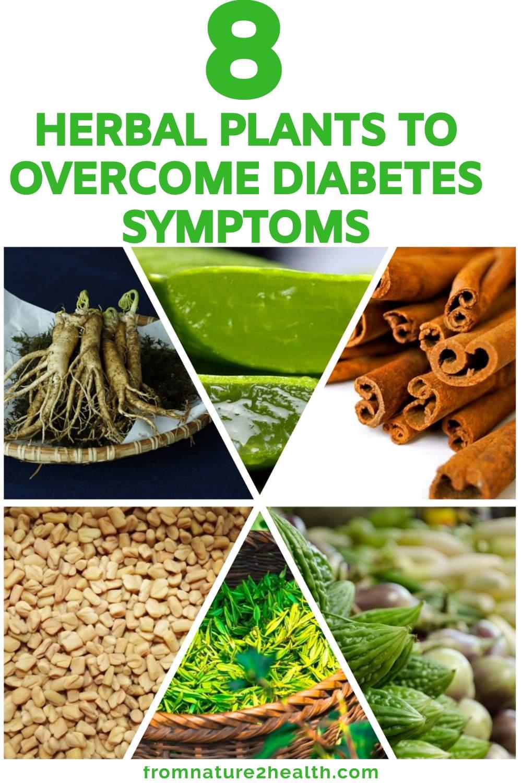Aloe Vera, Bitter Melon, Cinnamon, Fenugreek, Ginseng to Overcome Diabetes Symptoms