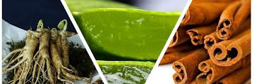 8 Herbal Plants to Overcome Diabetes Symptoms