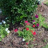 Gardening 2010, Part Two - 101_3511.JPG