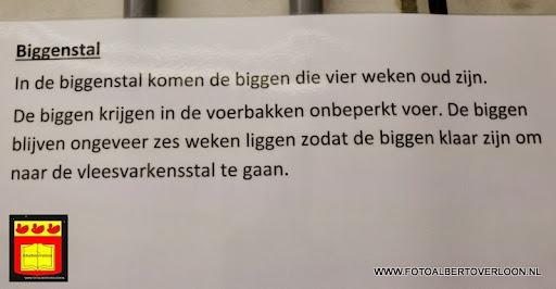 Open dag varkensbedrijf molenpas overloon 29-06-2013 (7).JPG