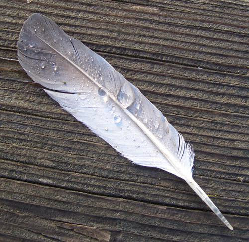 Bonesofaphoenixthe Use Of Feathers In Folklore And