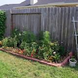 Gardening 2010, Part Two - 101_3008.JPG