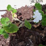 Gardening 2010 - 101_0440.JPG
