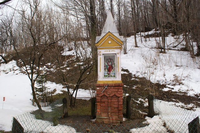 Zajęcia terenowe 29 lutego 2012 - DSC06171_1.JPG