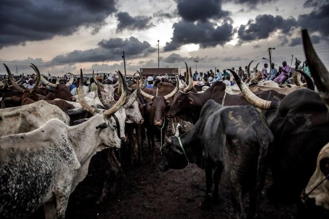 Big Troube, Arewa group defends Ruga Settlement, blasts Ohanaeze's Nwodo, Fani-Kayode