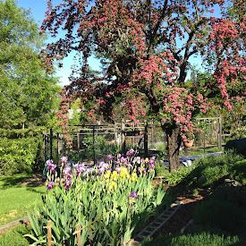 Iris Garden in Paradise