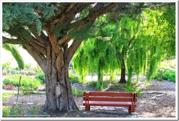 160321_SLOBG_0056_Quercus-suber