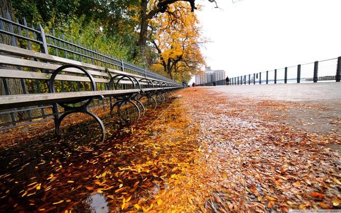 برگ ریزان خاطره هایم