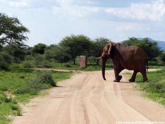 elefante-cruza-carretera-namibia.JPG